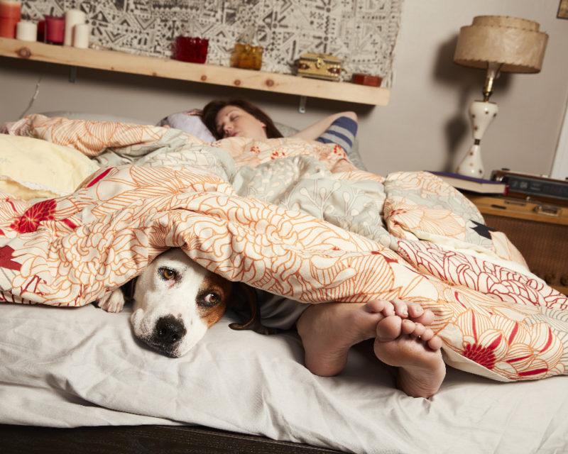 25 Random Facts about ABC's Downward Dog show   Downward Dog Cast: Samm Hodges, Allison Tolman Interview