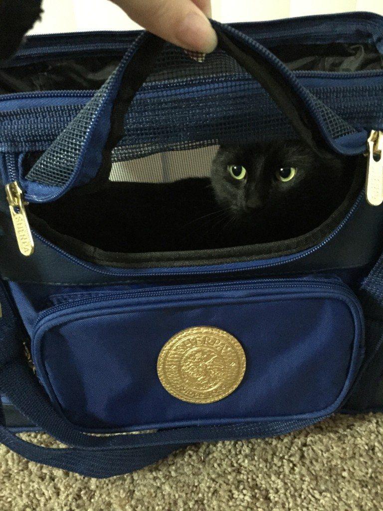 Metro Cat Tote 1