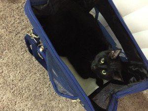 Metro Cat tote 2