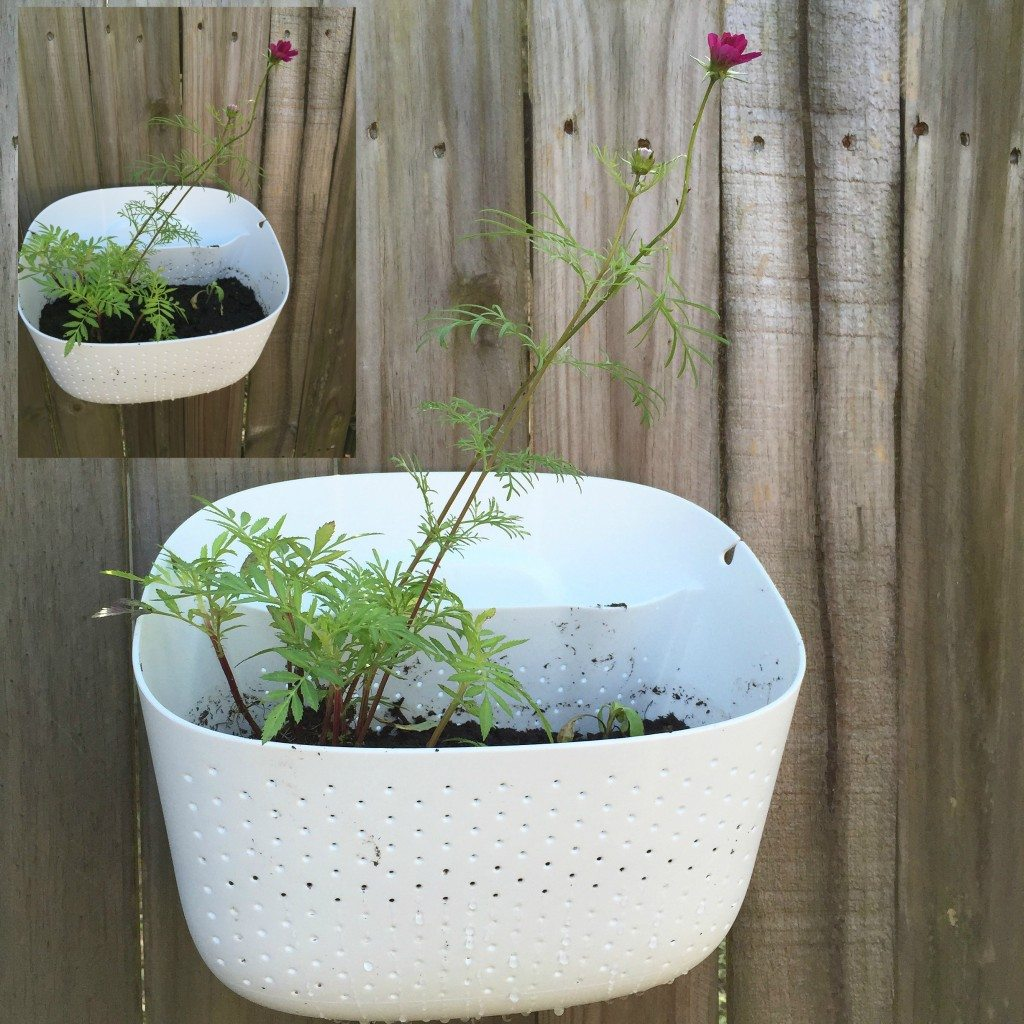 The Woolly Pocket 2- A loving Wall Planter