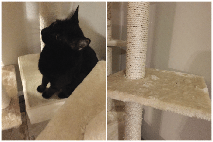 Cozy Cat Furniture- For The Spoiled Cats
