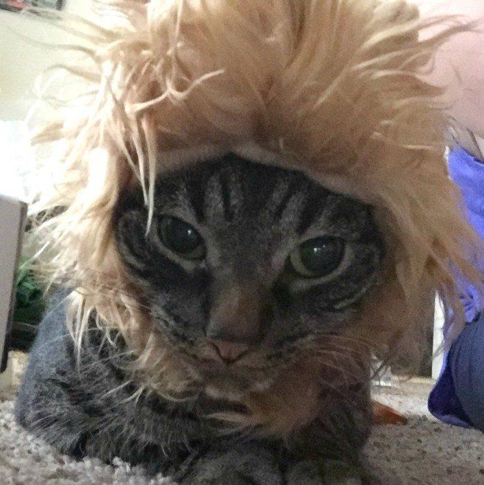 Mac Cat Hat