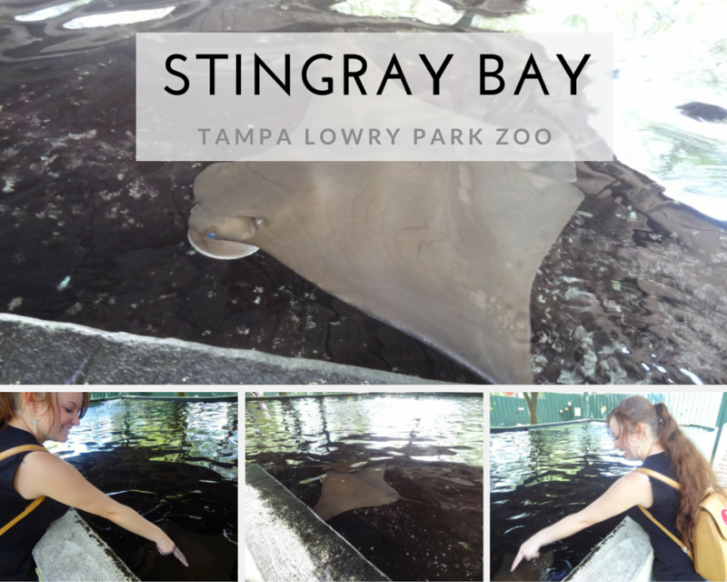 STINGRAY BAY at Tampa's Lowry Park Zoo