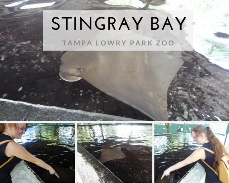 STINGRAY BAY at Tampa's Lowry Park Zoo