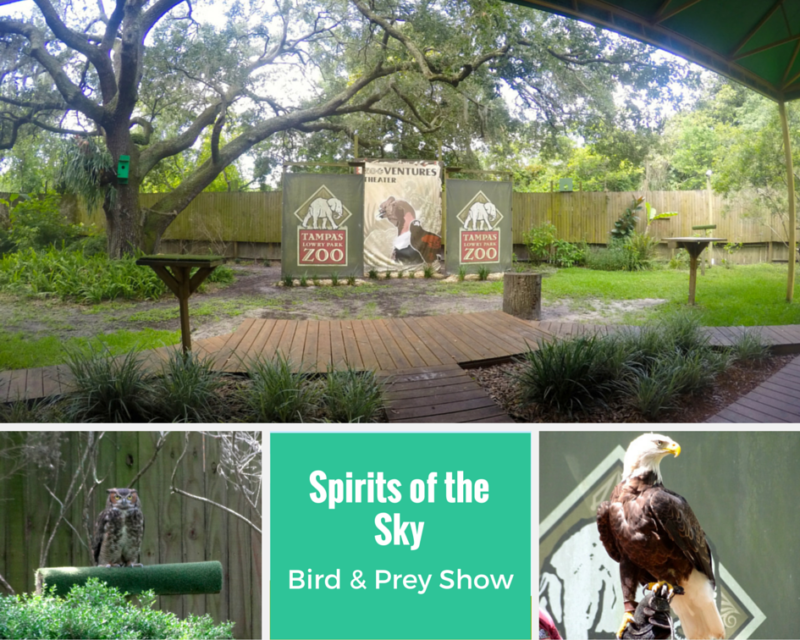 Spirits of The Sky Bird & Prey Show at Tampa's Lowry Park Zoo