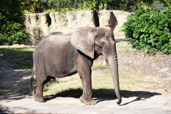 Elephant at animal kingdom
