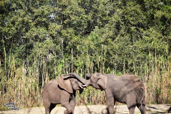 Elephants PLaying Animal Kingdom