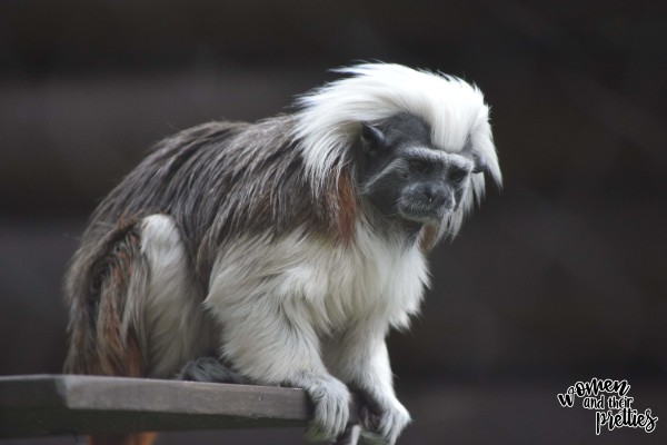 Monkey at Animal Kingdom
