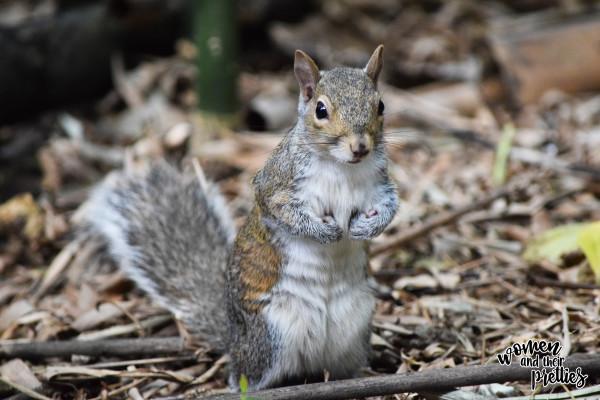 Squirrel Animal Kingdom