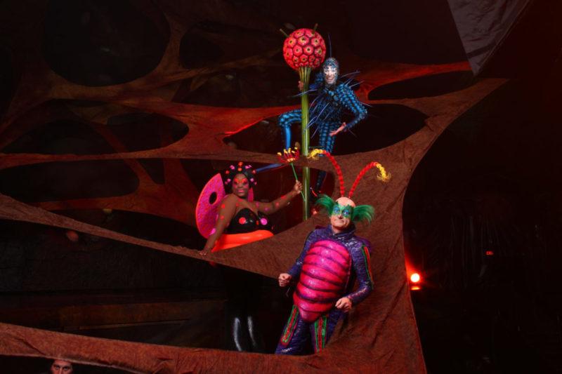 Cirque De Soleil Florida OVO