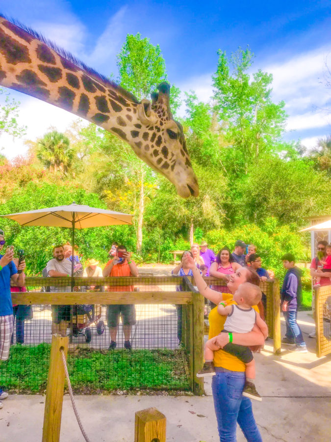 Best things to do in Orlando for toddlers