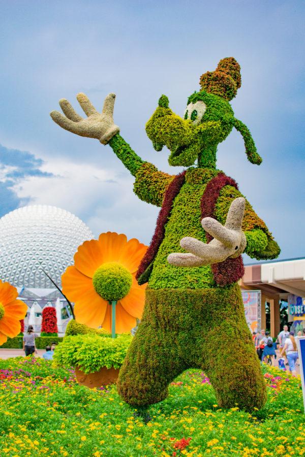 Goofy Topiary Epcot