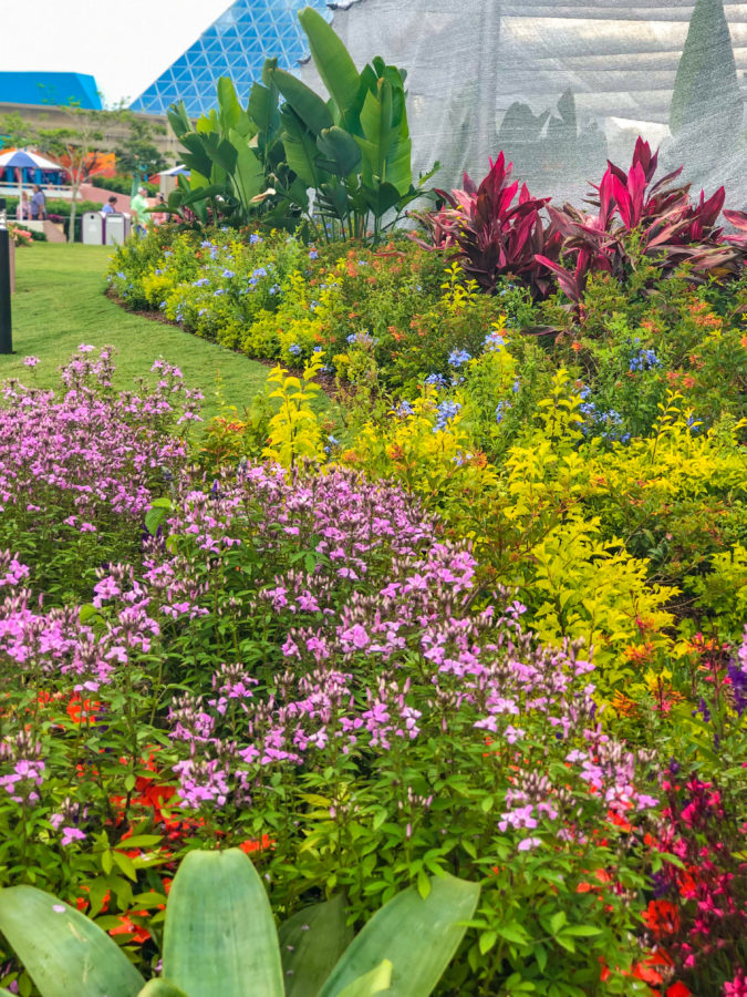 Butter Fly Garden_ 2019 Epcot Flower & Garden Festival