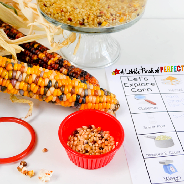 Corn and Popcorn Fall Science & Sensory Play for Kids