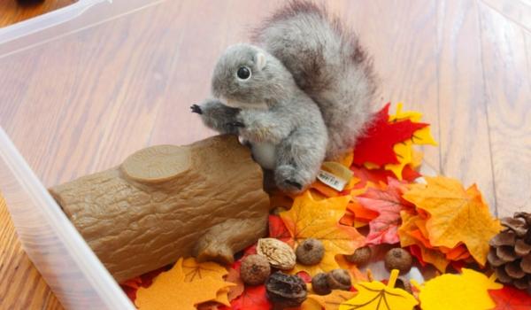 Squirrel Sensory Bin