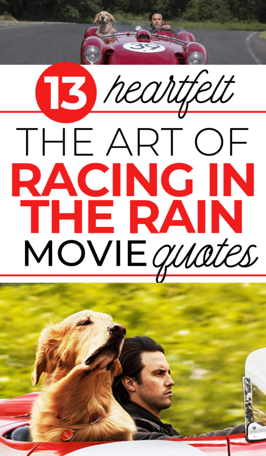 These heartfelt The Art of Racing in the Rain movie quotes will have you feeling all of the things! You'll want to see this book to film adaption right away!