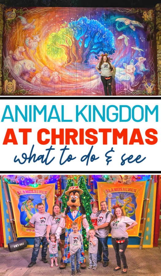 What to do at Animal Kingdom Christmas Time