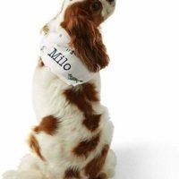 Flannel Dog Bandana ($9.99)