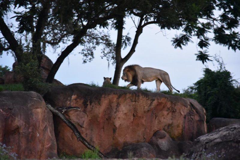 Animal Kingdom Night Safari