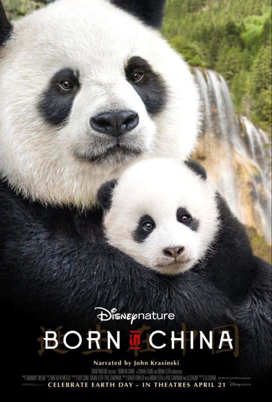 Born In China Review – 5 reasons to take your family to see Born in China in theaters, especially during opening week #BornInChina