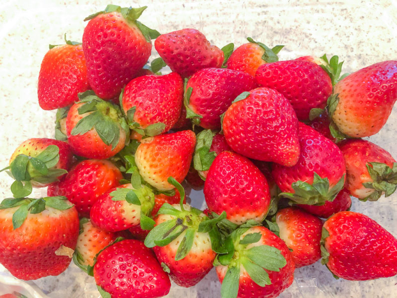Fresh From Florida Strawberries in season