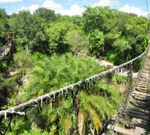 Best Animal Kingdom Experiences